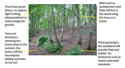Woods_with_instructions_600x324_1