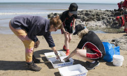Marine Conservation Society Beach Clean Up 2