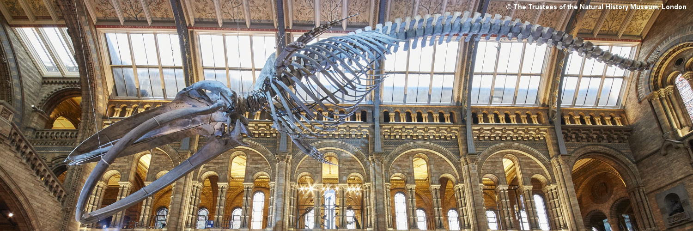 OCR Natural History Consultation